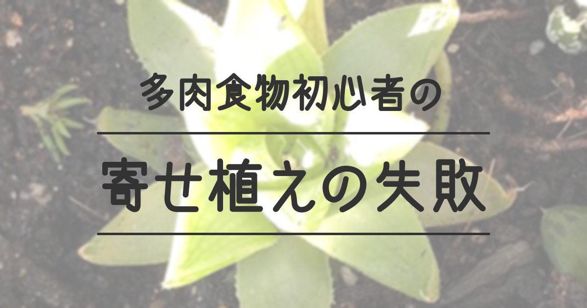 多肉植物初心者の寄せ植えの失敗