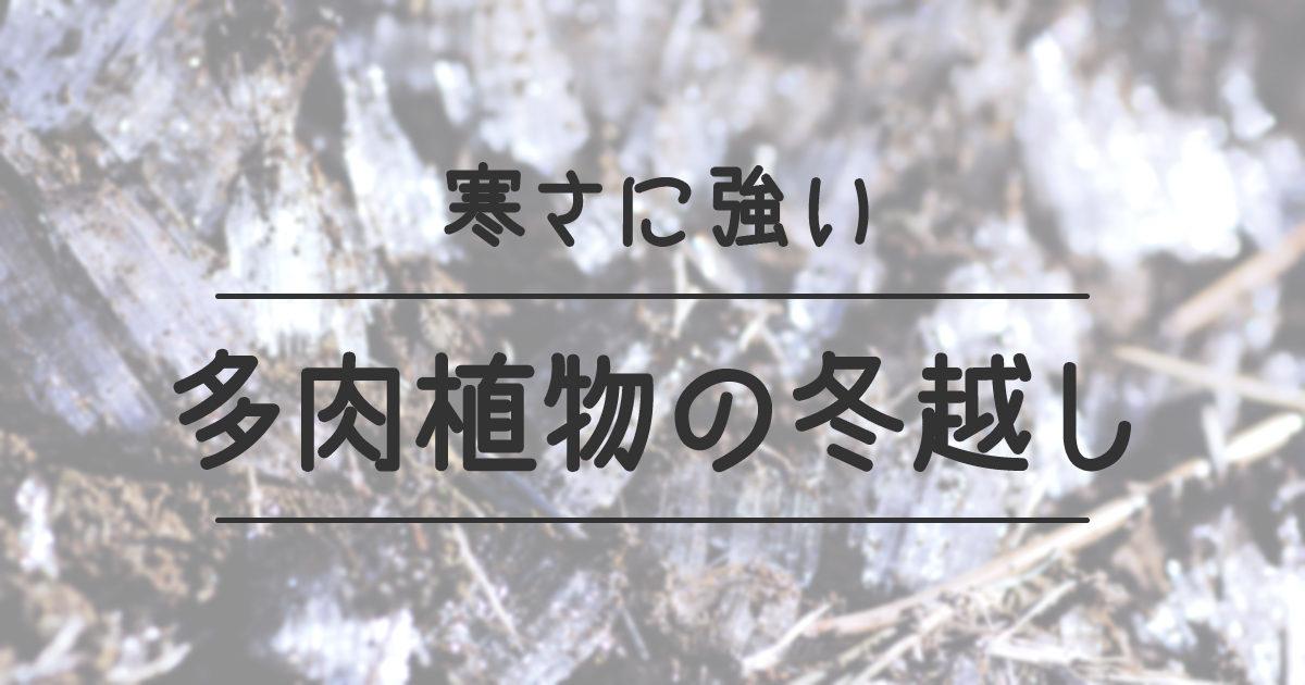 寒さに強い多肉植物の冬越し