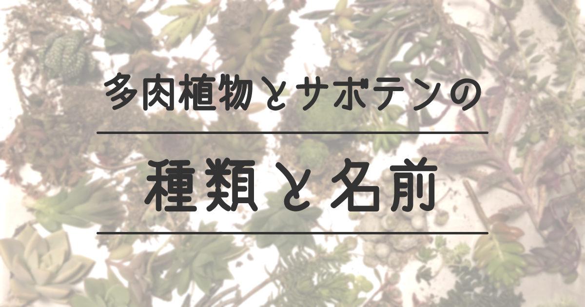 多肉植物とサボテンの種類と名前