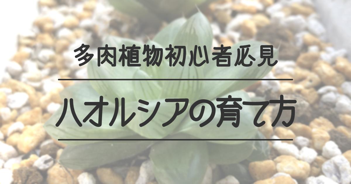 多肉植物初心者必見 ハオルシアの育て方